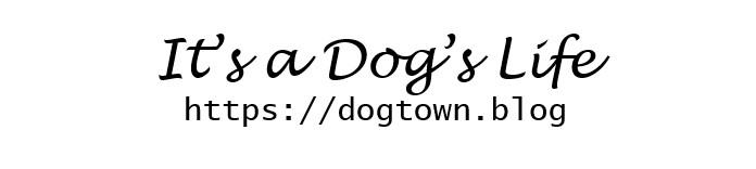 dogs_life_logo